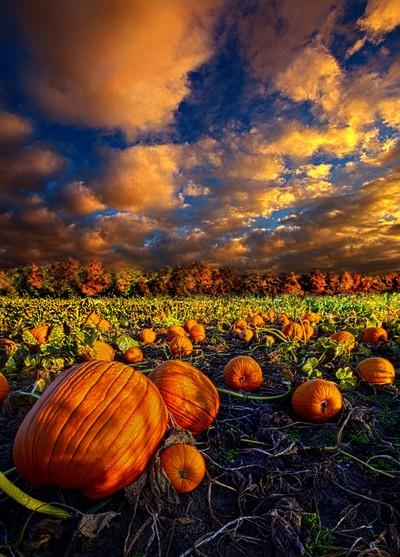Pumpkin Crossing