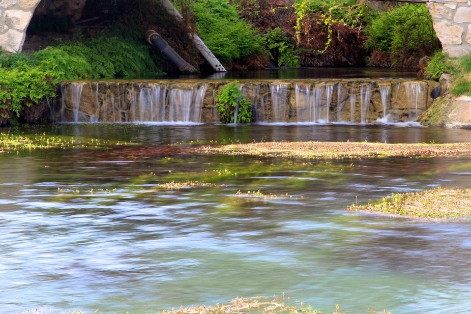 Carolina Springs on the Oasis Ranch is one of many springs that feeds Independence Creek and prov...