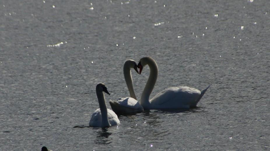 I Heart Nature!
