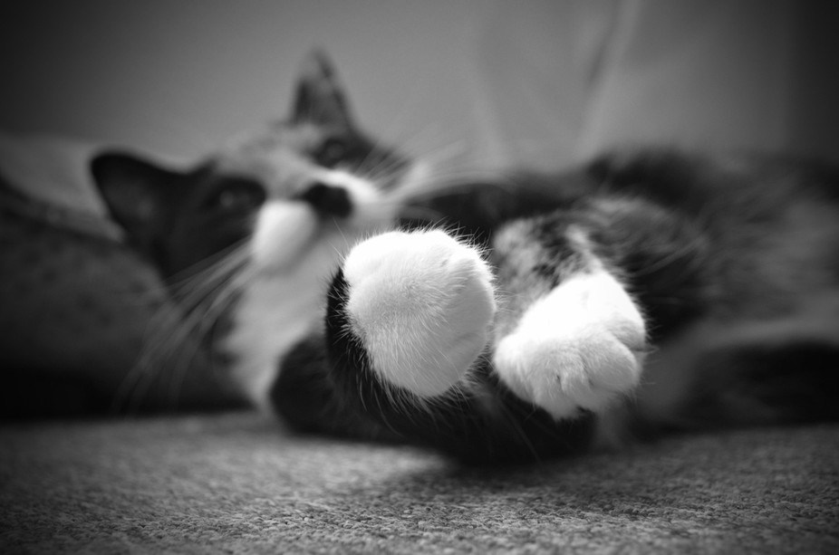 a friends cat..