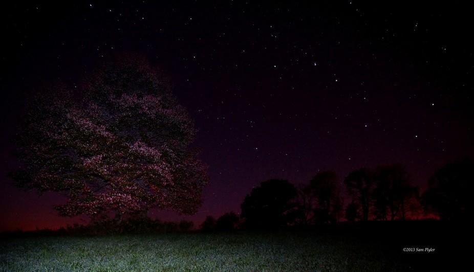 Night Red Tree