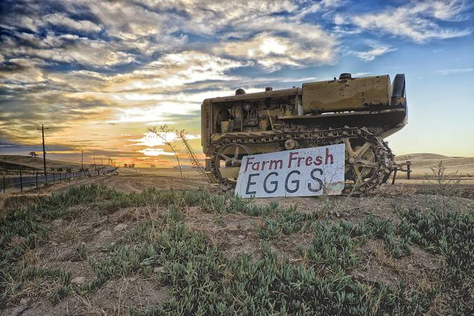 Farm Fresh Eggs by rhmimages - Letters And Words Photo Contest