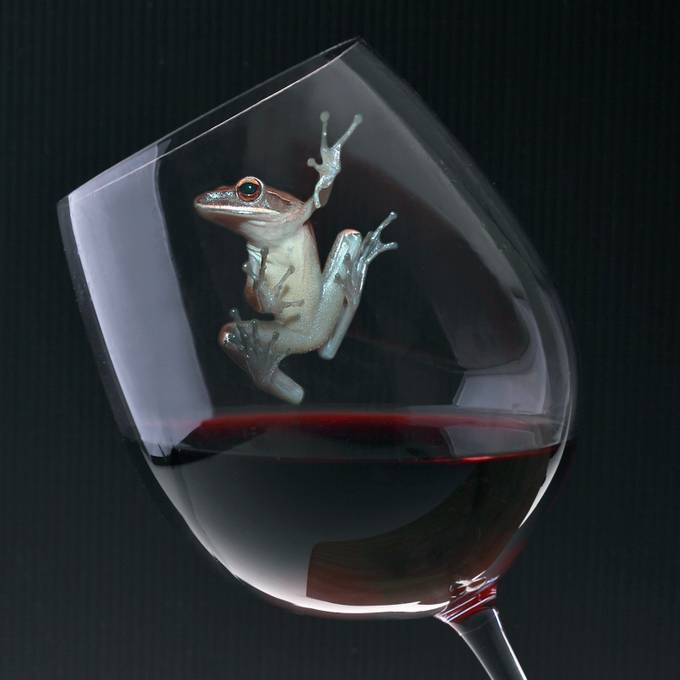 Wine Lover by Eduardbetz - Misplaced Photo Contest by PhaseOne