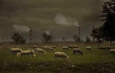 ecology destruction