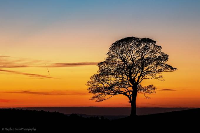 The Lonely tree by Steveilad - Silhouettes Of Trees Photo Contest