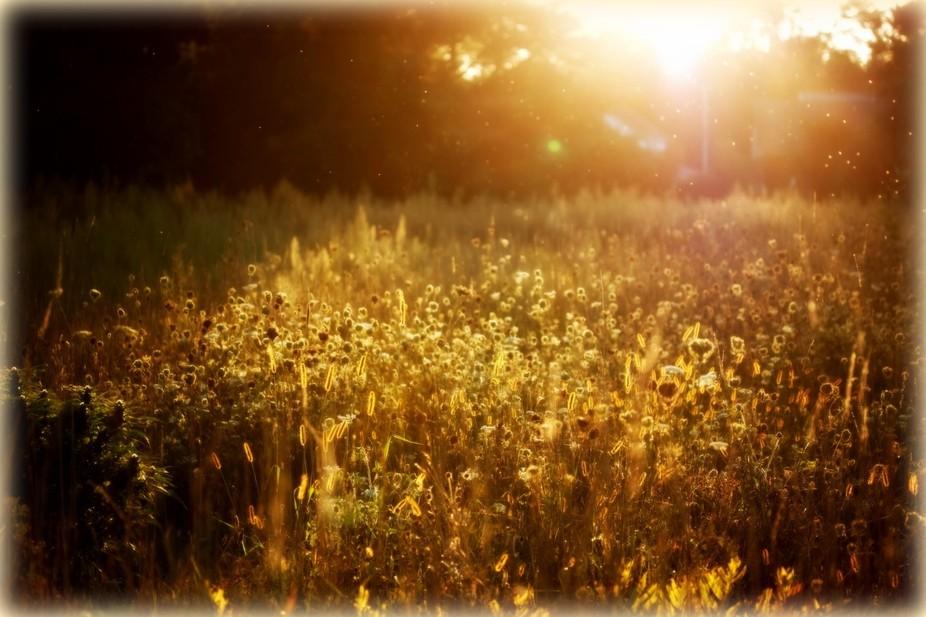 September at Sunset