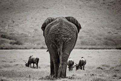 ellie walking away ngorongoro crater tanzania