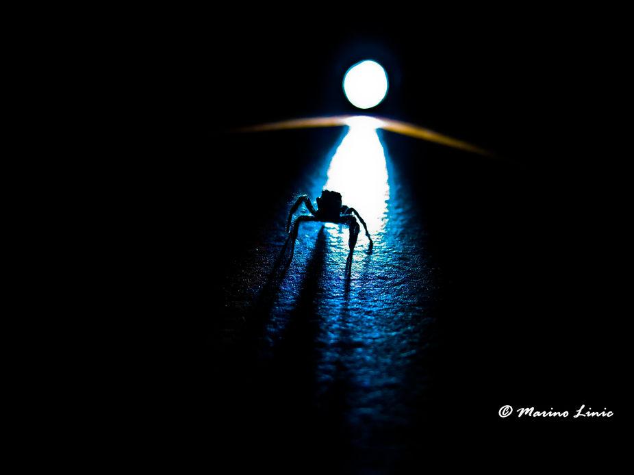 Jumping spider in dark