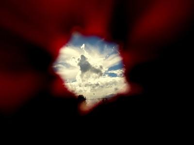 the world seen through a flower