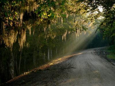 Lake Martins Winding Road