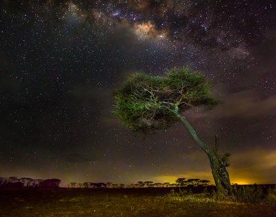 Acacia Under The Milky Way