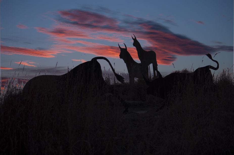 West Bottoms, Kemper Arena Kansas City MO. Bulls sculpture celebrating Stockyard history. Pentax ...
