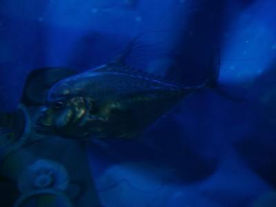 Slippery, Silver Fish