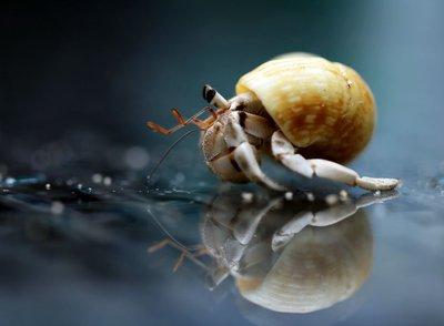 Hermit crab millamagiaphoto