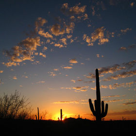 saguaro sunset2