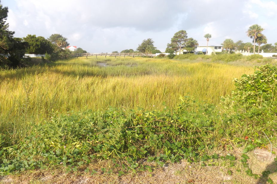 View across a salt marsh in Harbor Island, SC