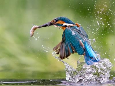 A great catch