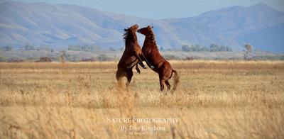 High Horses.