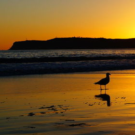 Seagull on the beach at sunset with its shadow reflected in the sand.