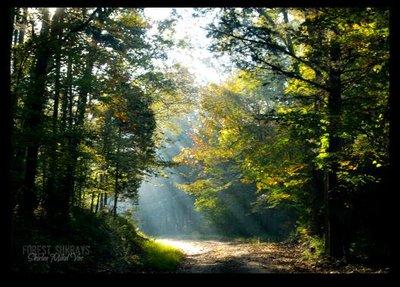 Foggy Morning at Land Between the Lakes