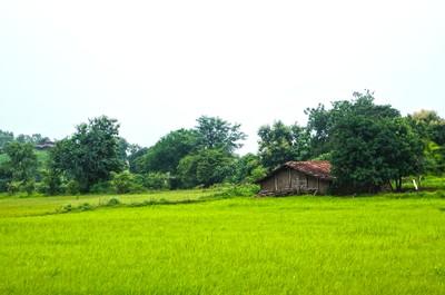 Lush Green House