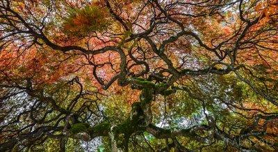 Tree of Power