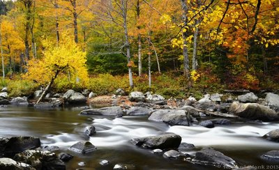 Ausable Gold