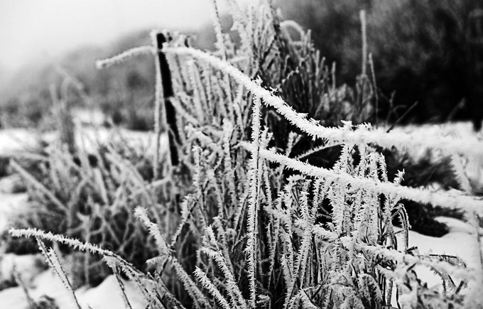 Early Morning frost mixed with snow.