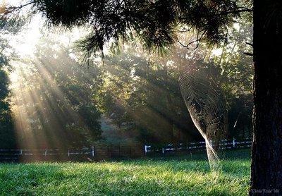 Sunrise, Sunrays & Spider Webs