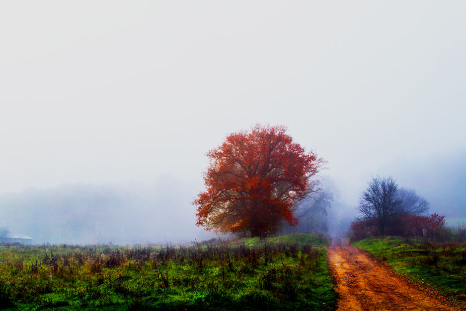 I took this photo in an early, foggy morning, in forest.