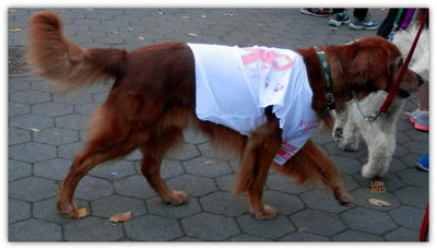 Pets Walk For The Cause