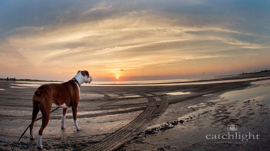 Sunset Birdwatch