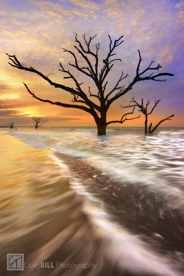 Tidal Trees by CraigBill - Tree Silhouettes Photo Contest