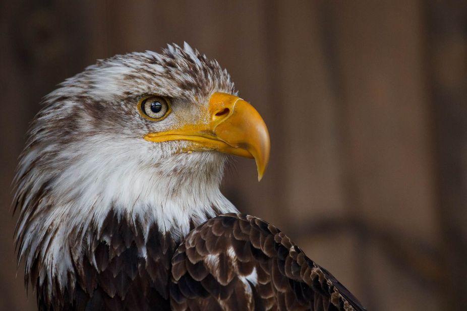 Omega Park, captive bird