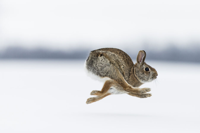 Rabbit Run by JustinRussoPhotography - Fast Photo Contest