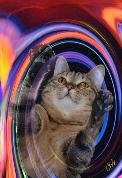 Light painting Kitty