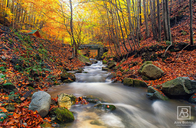 Iavas by alexandrubobica - Fall 2016 Photo Contest