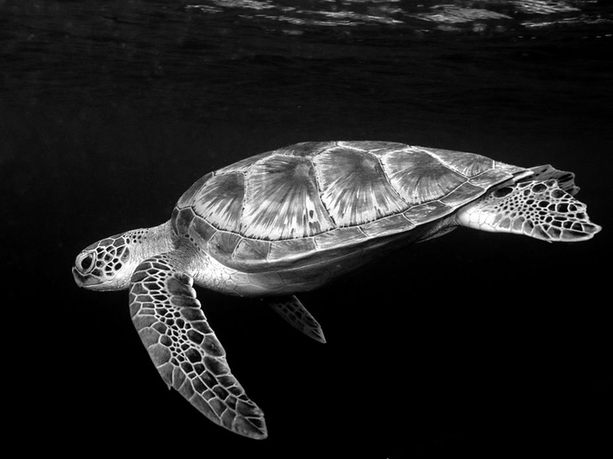 Contrast in Black and White Photo Contest Winners! - ViewBug com