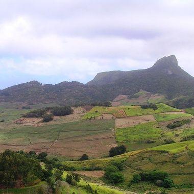 Overlooking sugar cane & Tea Plantations