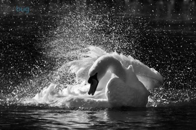 Odette by ajmphoto - Epic Black and White Photo Contest