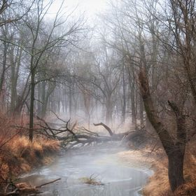 Icy Stream with a foggy haze In central Illinios