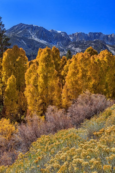 Fall on Tioga Pass