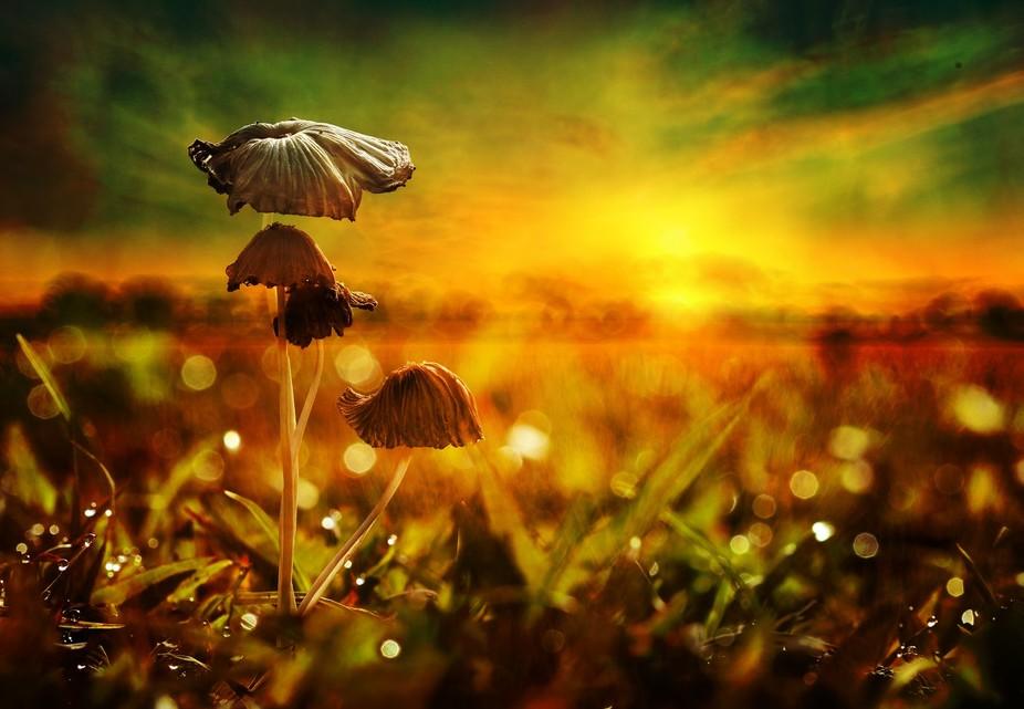Mushroom Sunset