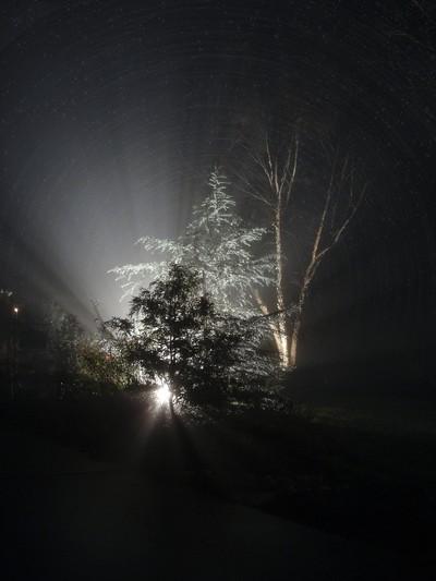 Nocturnal Cedar Frost
