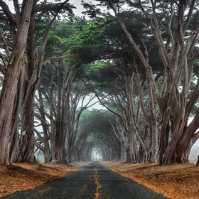 Shot on a foggy morning in the Point Reyes area.