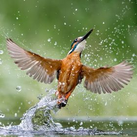 Another shot from my kingfisher experience
