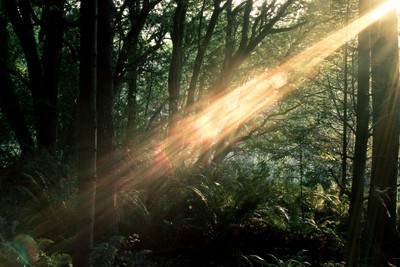 Forest Flare