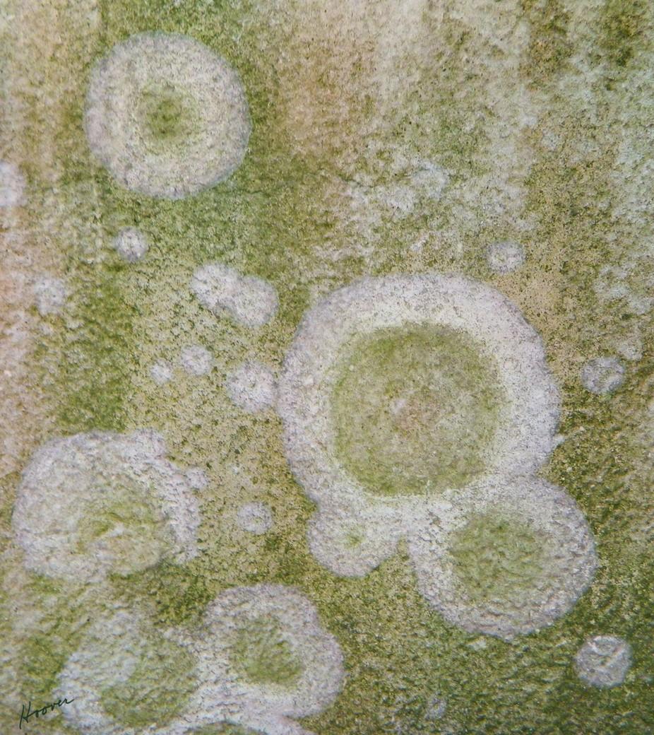 Fungus on a wall