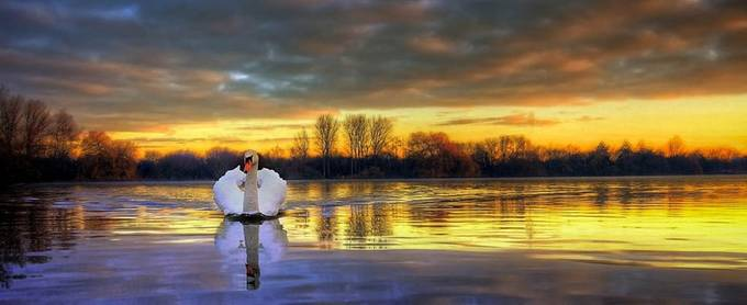 SwanRise by Rwbjj - Nature In HDR Photo Contest