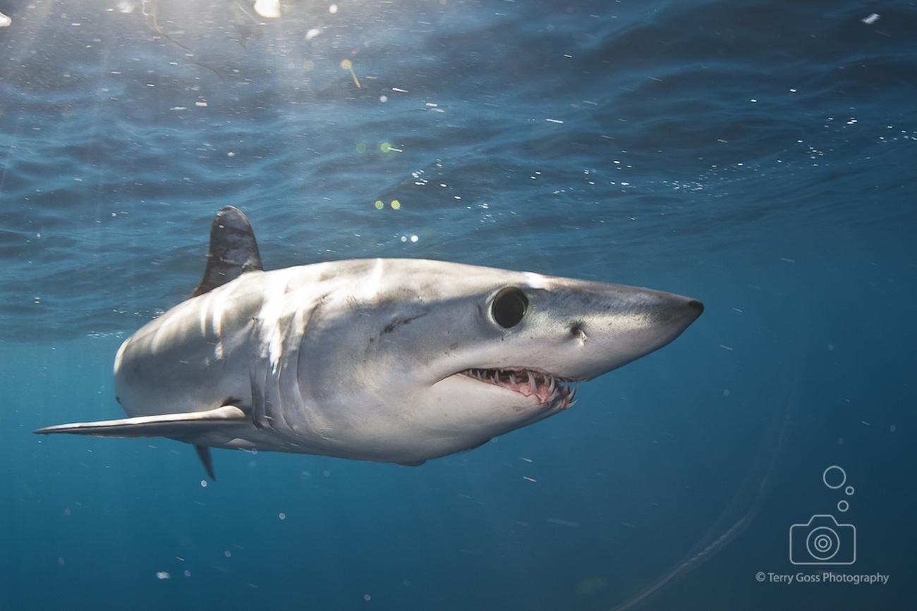Underwater Photography Tips